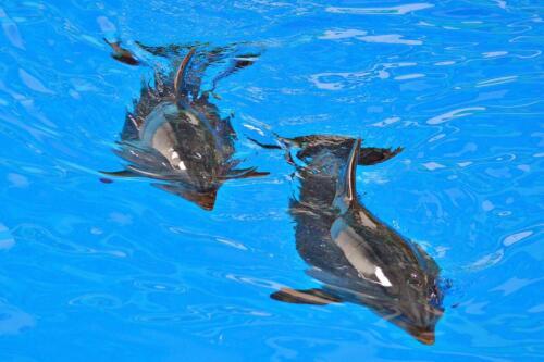 Дельфинарий. Сочи